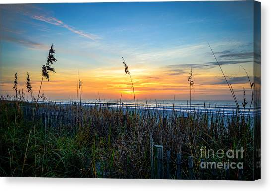 Sea Oats Sunrise Canvas Print