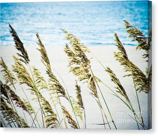 Sea Oats Canvas Print by Tonya Laker