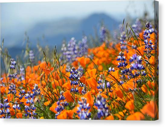 Sea Of California Wildflowers Canvas Print