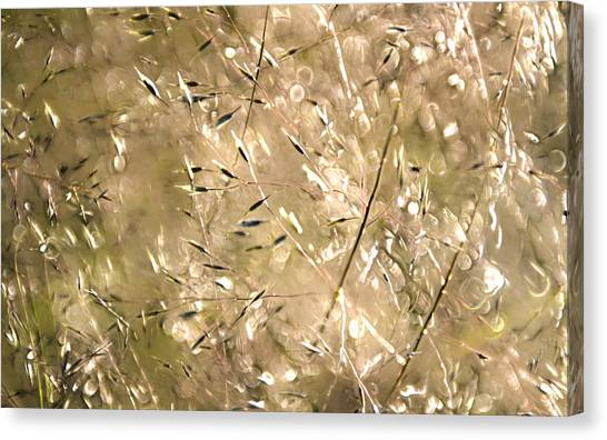 Sea Of Grass Canvas Print