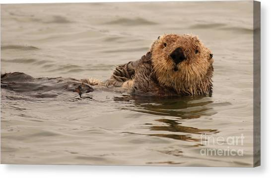 Sea Otter All Cuddled Up Canvas Print by Max Allen