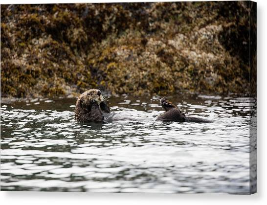 Sea Otter Floating In The Bay Canvas Print