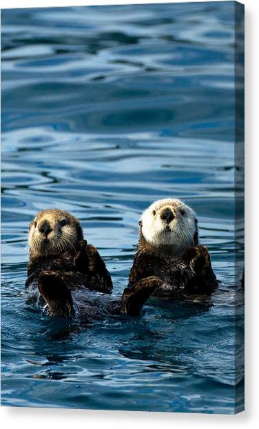 Sea Otter Pair Canvas Print