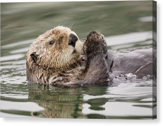 Sea Otter Profile Canvas Print by Tim Grams