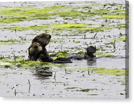 Sea Otters 1 Canvas Print