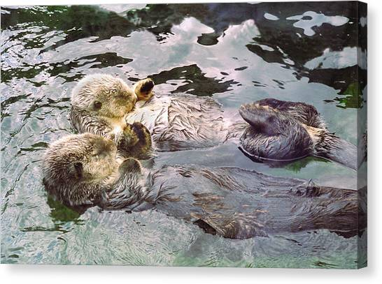 Otters Canvas Print - Sea Otters Holding Hands by BuffaloWorks Photography