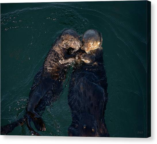 Sea Otters II Color Canvas Print