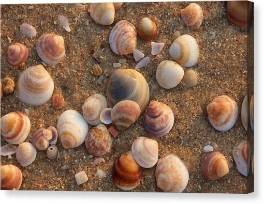 Sea Shells At Sunset Canvas Print