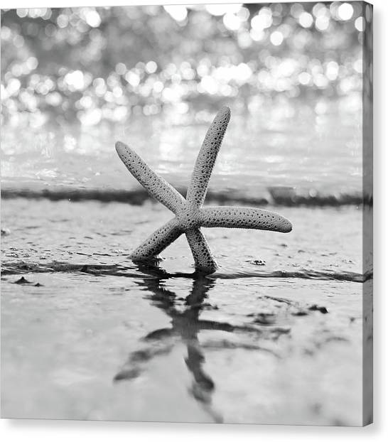 Florida House Canvas Print - Sea Star Bw by Laura Fasulo