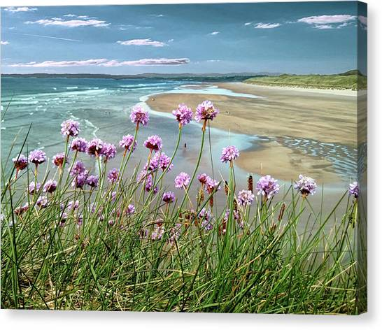 Sea Thrift Wild Flowers - On The Cliff Edge Above Tullan Strand Canvas Print