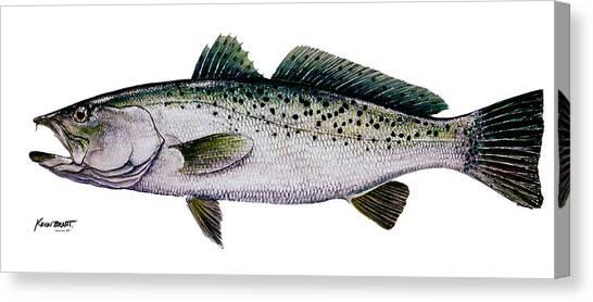 Sea Trout Canvas Print