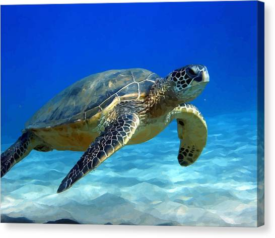 Sea Turtle Blue Canvas Print by Peter Oconor