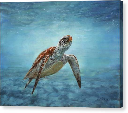 Turtles Canvas Print - Sea Turtle by David Stribbling