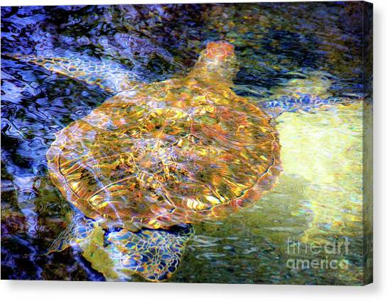Canvas Print featuring the photograph Sea Turtle In Hawaii by D Davila