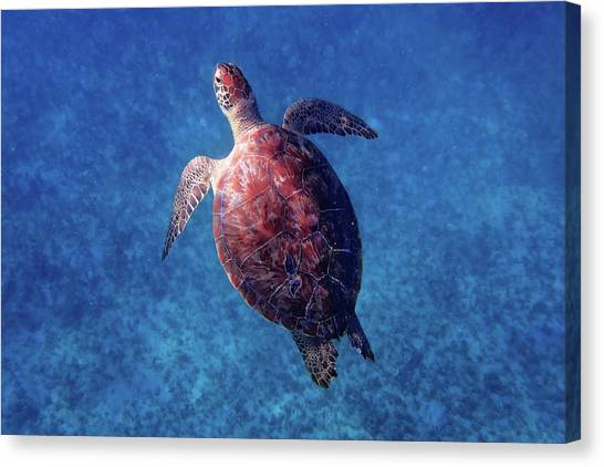Canvas Print featuring the photograph Sea Turtle by Lars Lentz