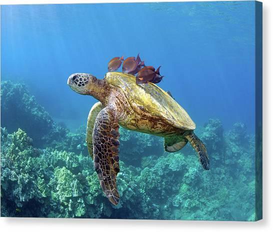 Sea Turtles Canvas Print - Sea Turtle Underwater by M.M. Sweet