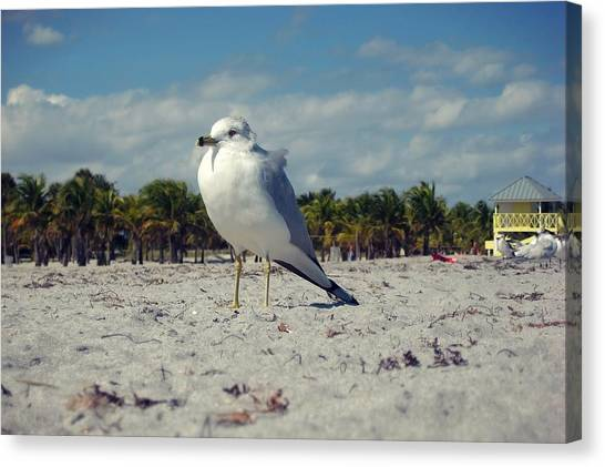 Seabird Canvas Print by JAMART Photography