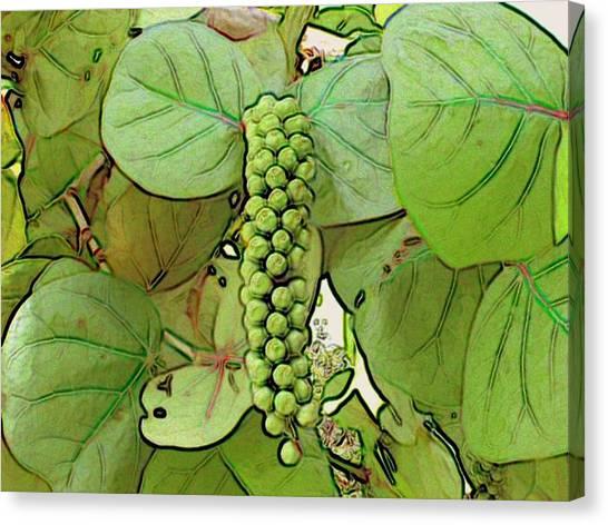 Seagrape Canvas Print by George I Perez
