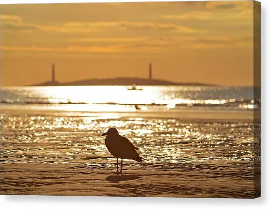Seagull Admiring Thacher Island Gloucester Ma Good Harbor Beach Canvas Print