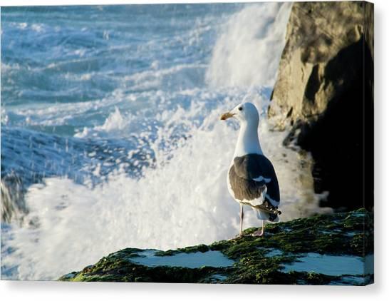 Seagull And The Sea Canvas Print