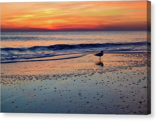 Seagull At Sunrise Canvas Print
