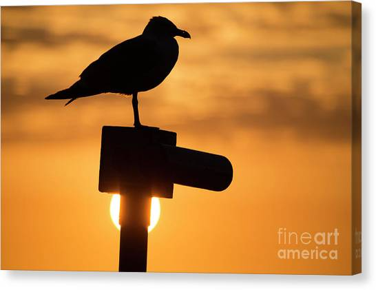Seagull At Sunset Canvas Print