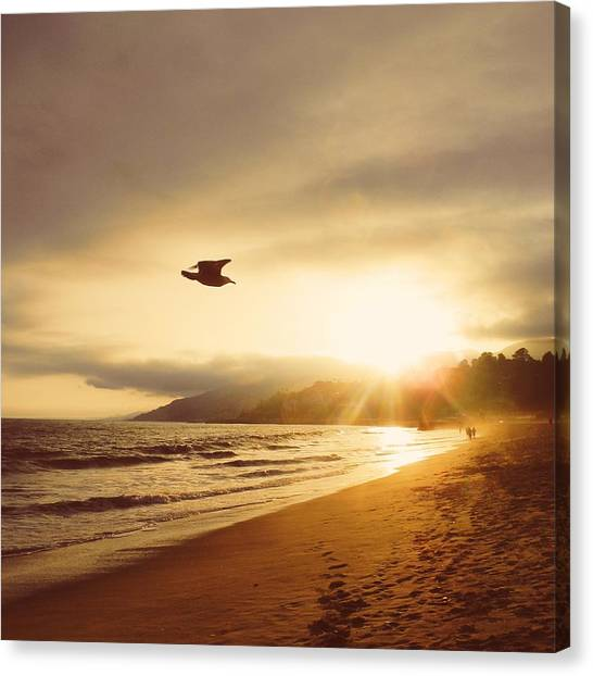 Santa Monica Canvas Print - Seagull At Sunset by Robert Ceccon
