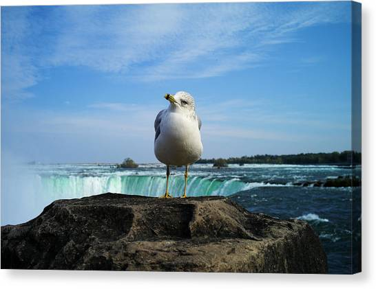 Seagull Checking Out The Photographers Canvas Print
