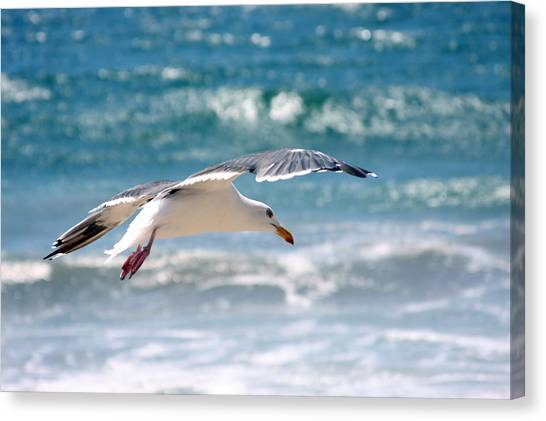 Seagull Flight Canvas Print by Stormshade Designs