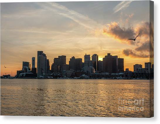 Seagull Flying At Sunset With The Skyline Of Boston On The Backg Canvas Print