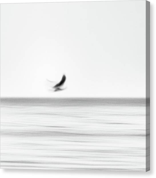 Seagull Canvas Print by Holger Nimtz
