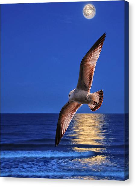 Canvas Print - Seagull In The Moonlight by Peg Runyan