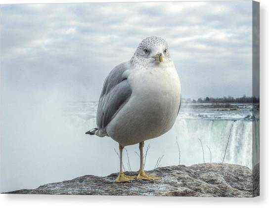 Canvas Print featuring the photograph Seagull Model by Garvin Hunter