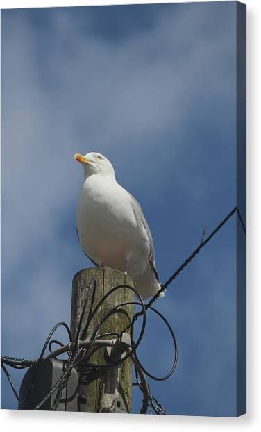 Seagull Perching. Canvas Print