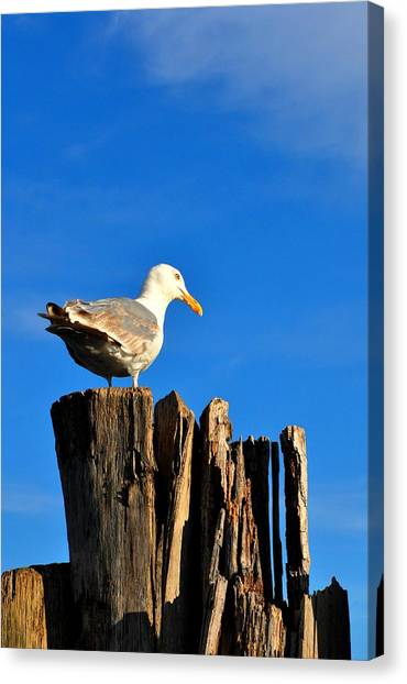 Seagull On A Dock 2 Canvas Print by Andrew Dinh