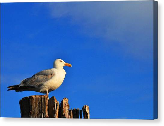 Seagull On A Dock Canvas Print by Andrew Dinh