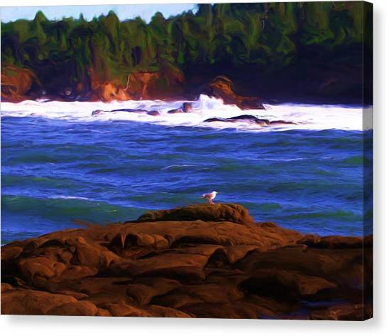 Seagull On Rock Canvas Print by Shelley Bain