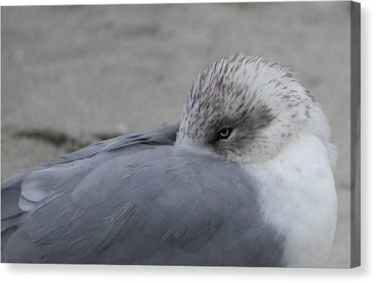 Seagull On The Beach Canvas Print
