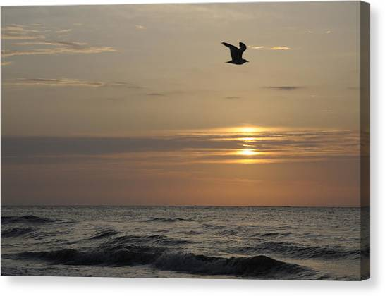 Seagull Over Atlantic Ocean At Sunrise Canvas Print by Darrell Young