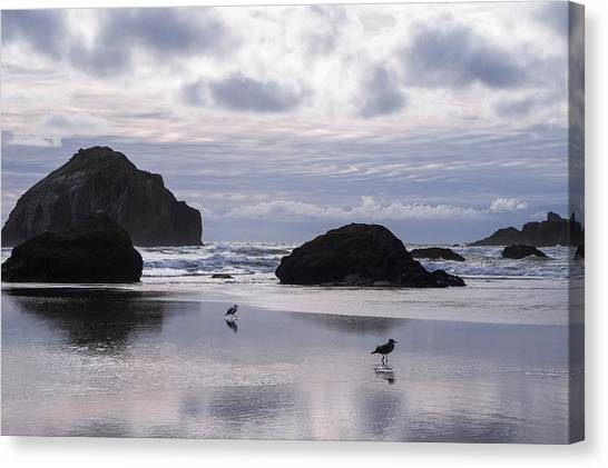 Seagull Reflections Canvas Print