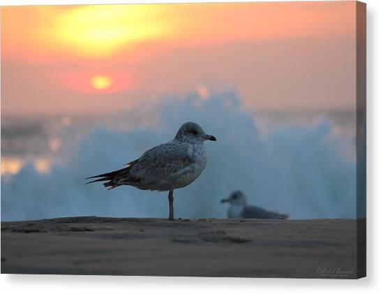 Seagull Seascape Sunrise Canvas Print