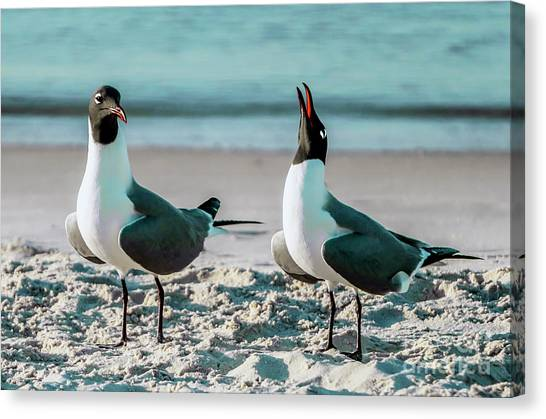 Seagull Serenade 4954 Canvas Print
