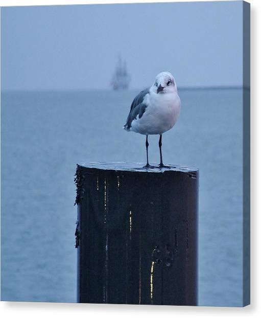 Seagull Ship Canvas Print