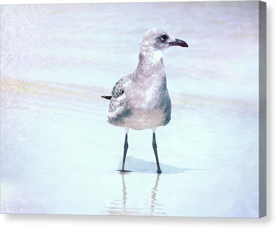 Seagull Stance Canvas Print by JAMART Photography