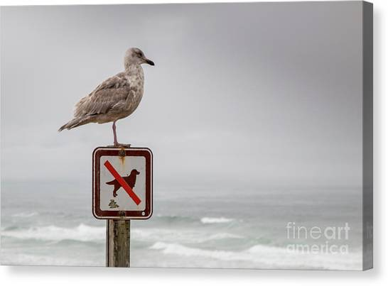 Seagull Standing On Sign And Looking At The Ocean Canvas Print