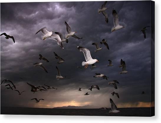 Seagull Storm Canvas Print by Gene Praag