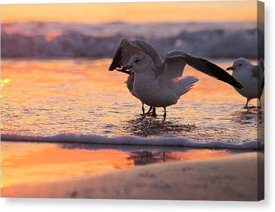 Seagull Stretch At Sunrise Canvas Print