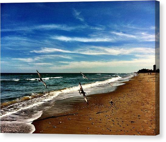 Seagulls At The Beach Canvas Print