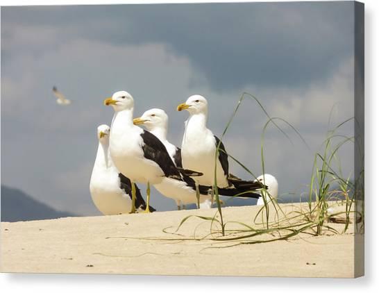 Seagulls At The Beach Canvas Print