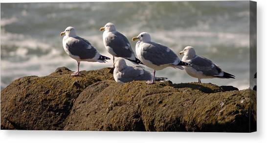 Seaguls Canvas Print by Curtis Gibson